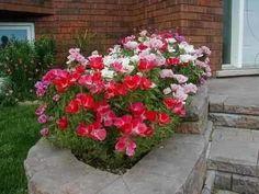 400 sementes da flor godétia azaléia sortida promoçao!!
