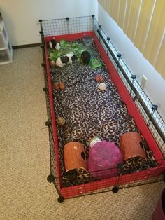 Indoor Guinea Pig Cage, Hedge Hog, Hamsters, Guinea Pigs, Family Life, Rabbits, Turtles, Cute Animals, Bunny