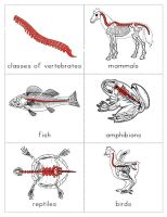 Fantastic! - The Helpful Garden: Classes of Vertebrates Cards and Little Booklet
