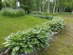 kuunlilja Garden, Plants