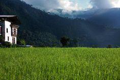 Punakha valley view from Uma Punakha, Bhutan.