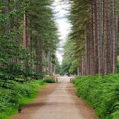 So hot though! Sherwood Pines, Dog Walking, Nature Photography, Country Roads, Twitter, Nice, Summer, Photos, Instagram