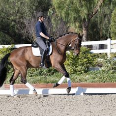 Horse Exercises, Horse Riding Tips, Show Jumping, 5 Year Olds, Dressage, David, Horses, Animals, Animales