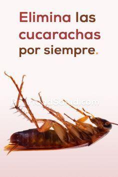24 Ideas De Recetas De Limpieza Recetas De Limpieza Trucos De Limpieza Remedios Para Cucarachas