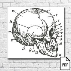Skull Cross Stitch Pattern PDF FILE by Kaplio on Etsy