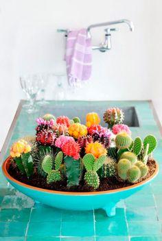 Centro de cactus y crasas