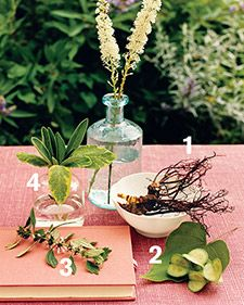 17 essential herbs can help treat dozens of women's health issues.