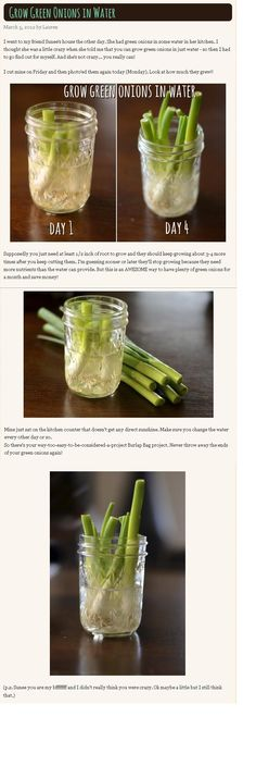 Recycled green onions...