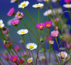 Luisa's flowers