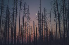"""charleyzheng: """" That feeling of being in the woods, at sunset, in the quiet. """""""