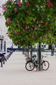 Le Printemps à Paris. Paris in Springtime. Places Around The World, Oh The Places You'll Go, Places To Travel, Places To Visit, Around The Worlds, Beautiful Paris, I Love Paris, Tour Eiffel, Paris France