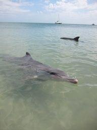 Smiling dolphin at Monkey Mia, Western Australia