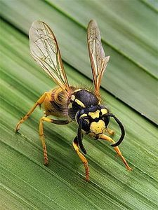 Wasp Spray; I can REALLY attest to it's effectiveness in killing wasp.  Dish detergent and warm water in a sprayer!  The wasps were dying right before my eyes!  I would call that instant gratification.  Just spray it repeatedly.