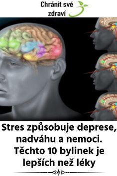 Stres způsobuje deprese, nadváhu a nemoci. Těchto 10 bylinek je lepších než léky Detox, Diy And Crafts, Health, Health Care, Salud