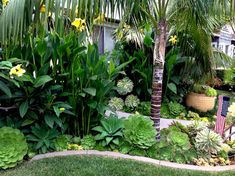 says - This seems like a more tropical but mixed with succulents and more . Jenny says - This seems like a more tropical but mixed with succulents and more ., Jenny says - This seems like a more tropical but mixed with succulents and more . Florida Landscaping, Tropical Landscaping, Landscaping With Rocks, Backyard Landscaping, Landscaping Design, Canna Lily Landscaping, Palm Trees Landscaping, Tropical Garden Design, Tropical Backyard