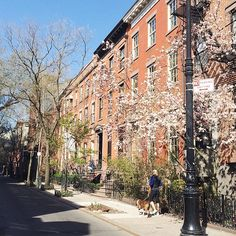 Spring morning in the West Village  #Padgram