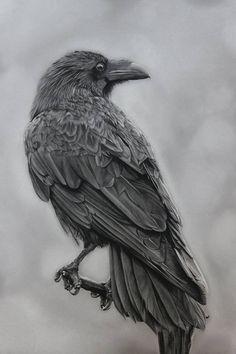 Original Animal Drawing by Jasmin Ahokas | Photorealism Art on Cardboard | You have already found what you seek