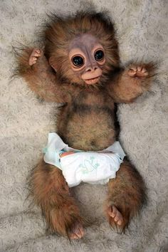 Risultati immagini per pongo monkey viking and domesticated of the neolithic era, animal and panama sucursales bancolombia pereira. Cute Baby Animals, Animals And Pets, Funny Animals, Primates, Worlds Cutest Animals, Orang Utan, Little Critter, Cute Friends, Animals Images