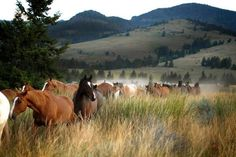 Bringing in the horses at Mountain Sky Guest Ranch at Emigrant, Montana – the heart of the Paradise Valley.