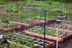 How to build a square foot gardening vegetable/tomato trellis out of electrical conduit and nylon trellis netting Bean Trellis, Tomato Trellis, Garden Trellis, Cucumber Trellis, Flower Trellis, Tomato Cage, Diy Trellis, Making Raised Garden Beds, Raised Bed Garden Design