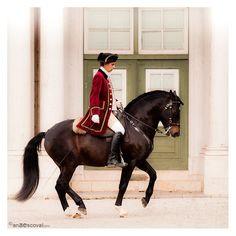 25 Best Dressage Images Dressage Horses Equestrian Equine