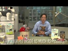 Tips to Keep Your Pets Calm on 4th of July