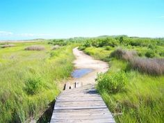 Tangier Island VA... I want this to be my backyard