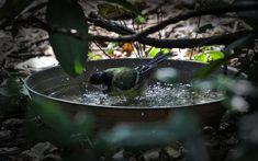 Varázslatos kert ötletek házilag - Ketkes.com Bird, Outdoor Decor, Birds