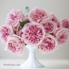 Flirty Fleurs Pink Garden Roses Study with Alexandra Farms - David Austin Miranda Pink Garden Rose David Austin Roses, Romantic Roses, Beautiful Roses, Color Magenta, Colour, Pink Garden, Garden Roses, Bouquet Photography, Rose Vase
