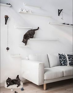 IKEA picture ledge hacks - IKEA picture ledge hacks Two cats play on DIY cat shelves made from IKEA MOSSLANDA picture ledges mounted at different heights above a sofa. Mosslanda Picture Ledge, Ikea Picture Ledge, Picture Wall, Diy Cat Shelves, Corner Shelves, Ikea Cat, Ikea For Cats, Diys For Cats, Ikea Hacks For Cats
