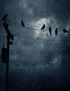 .Pássaros na chuva