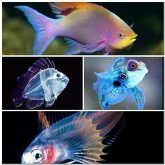 Sea creatures collage 11