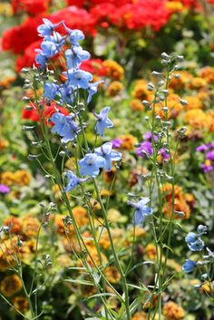 Separate Your Annuals from Perennials with Kincaid Plant Markers for Perennials. http://www.kincaidplantmarkers.com/.