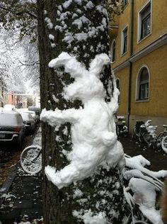 snow bunny crashes into a tree. I LOVE this!! oh... and it's actually a snow bunny!