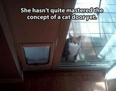 30 Funny CAT Pictures