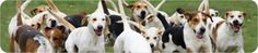 If this Legislation is passed.. Can open the door for the legalizing DOG AND CAT MEAT INDUSTRY... please share and sign. Federal Legislation - National Anti-Vivisection Society