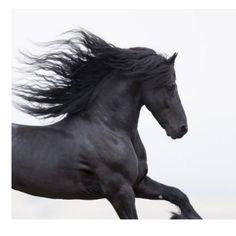 Black Friesian Runs Horse Christmas Ornament | Zazzle.com