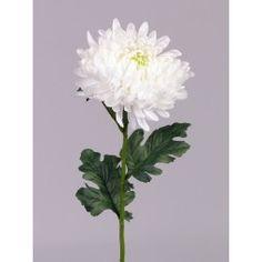 Kugel-Chrysantheme, weiß, 3 Blätter, 75cm, Ø 15cm