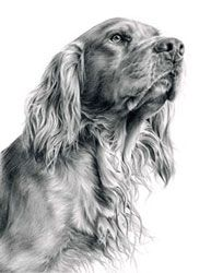 Pet portraits - dogs,cats,horses and other animals hand drawn and painted by artist Laura Hardie