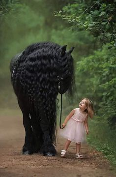 So beautifully taken,very unique love it ! Beautiful Horse Pictures, Most Beautiful Horses, Pretty Horses, Cute Animal Pictures, Horse Love, Animals Beautiful, Majestic Horse, Majestic Animals, Horse Girl Photography