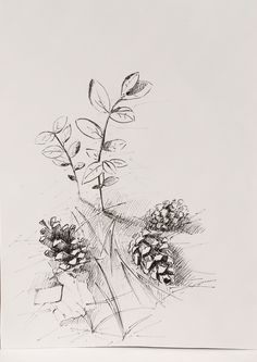 Pen drawing: fir cones. Forest #forest #fir cones #pen #brushpen #drawing #graphics #art #sketch #blackwhite #Svetlana_Senchurova