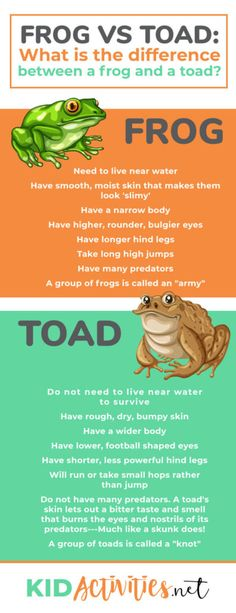 Frog vs Toad: What is the difference between a frog and a toad? Find the main differences that separate a frog and a toad. for kids activities Games For Kids Classroom, Science Classroom, Frog Theme Classroom, Classroom Ideas, Elementary Science, Frogs For Kids, Frog Facts For Kids, Fun Facts About Frogs, Amphibians