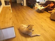 Oak parquet living room    פרקטים לסלון מעץ אלון טבעי   יורם פרקט טל: 050-9911998  http://parqet4home.wordpress.com/