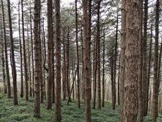 Trees by scrimafabio #nature #mothernature #travel #traveling #vacation #visiting #trip #holiday #tourism #tourist #photooftheday #amazing #picoftheday