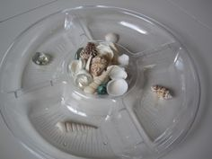 Shell sorting activity for preschool, perfect for a sea animals unit or beach theme. Sorting Activities, Preschool Themes, Craft Activities For Kids, Preschool Activities, Sand Table, 1st Grade Science, Math School, Forest School, Sea Shells