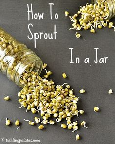 How to sprout Mung Beans / Lentils in a jar for Single Serve | ticklingpalates.com