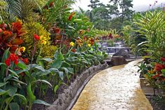 Florida Landscaping, Tropical Landscaping, Garden Landscaping, Hawaiian Gardens, Tropical Gardens, Backyard Shade, Shade Garden, Potted Plants, Garden Plants
