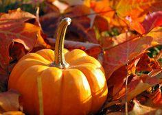 Love fall and pumpkins