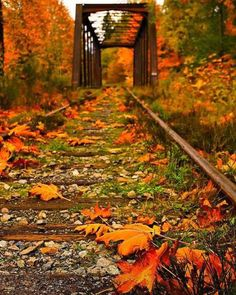 Fall in train bridge, Vancouver Island, British Columbia, Canada Fall Pictures, Pretty Pictures, Autumn Scenes, Seasons Of The Year, All Nature, Train Tracks, Vancouver Island, Beautiful Landscapes, Beautiful Places