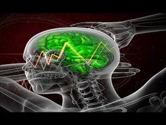 Brain Science Using Your Amygdala [FULL VIDEO]